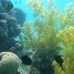 Small corall garden near the shore