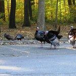 Warren Sand Dunes SP - Turkeys along the road