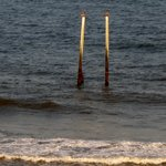 Pelicans perched on old pier posts