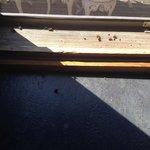 Dead flies in kitchen