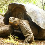 Giant tortoises at peace in this well maintained area