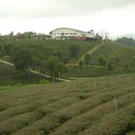 View of tea house and plantation.