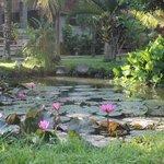 Un jardin de rêve à vos pieds