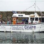 Seabird Cruise