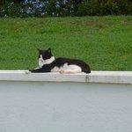 Pool Kitty