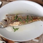 Grilled Jobfish