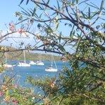 View from the walk through Mangrove