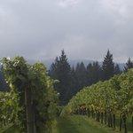Blakeslee Vineyards Sherwood OR