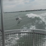 we saw SO many dolphins and they had so much fun playing with the boat!
