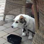 Outdoor seating for Pets