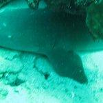 """Am """"Shark Reef"""""""