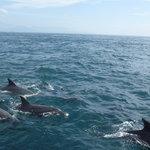 船の周りで泳ぐ「野良イルカ」