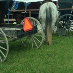 parked buggy and horse