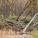 wetlands preserve in cherry creek state park