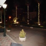View from Reception at night - palm trees.