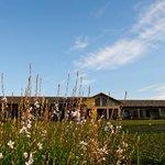 lovely fynbos garden