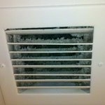 Furry things in the bathroom vent