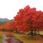 道の駅虹の湖公園②