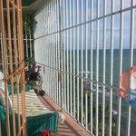 the hostel balcony