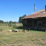 Cedar Mtn Farm B&B