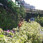 Сад в нашем отеле