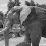 Elephant (parc pédestre)