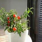 Pianta decorativa in terrazza