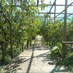 Il giardino coltivato