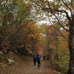 紅葉の観音沼遊歩道