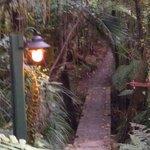 Upplysta gångar genom regnskogen