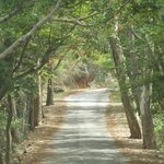 Ghat Road to Horsley Hills