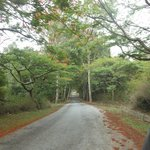 Way to Horsley Hills
