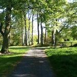 Tulfarris grounds