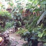 Un pequeño jardin a un lado de Recepción