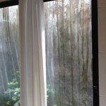 shower garden?