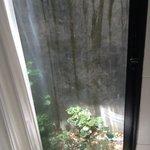 bizzare shower garden