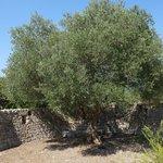 Giancarlo's Tree of Life