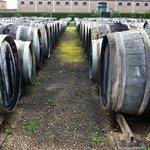 1500 wine barrels