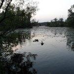 many lakes