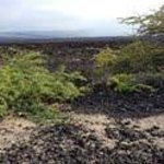 The lava fields that are around cottages