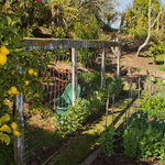 Fruit and veg garden