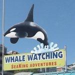Sea King Adventures