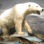 Polar Bear exhibit in museum