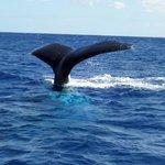 A whale of a trip