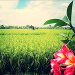 view from warung vietnam