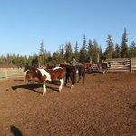 Horsepaddock