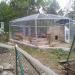 Hyena Cage