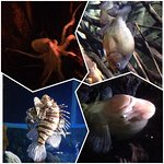 Жители океанариума