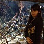 Аквариум с пираньями