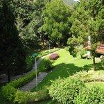 Garden from Pool Deck